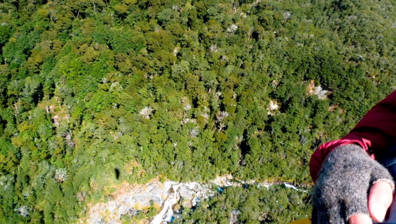 Flying over Routeburn beech forest on tandem, NZ